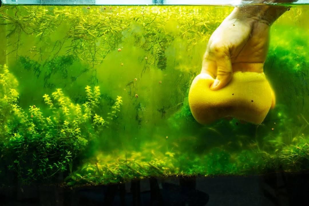 vệ sinh bể cá