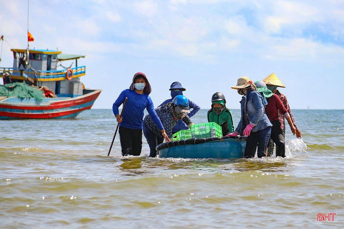 đánh bắt cá cơm