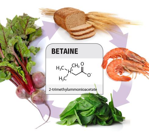 betaine, chất dẫn dụ, chức năng của chất dẫn dụ, thức ăn thủy sản