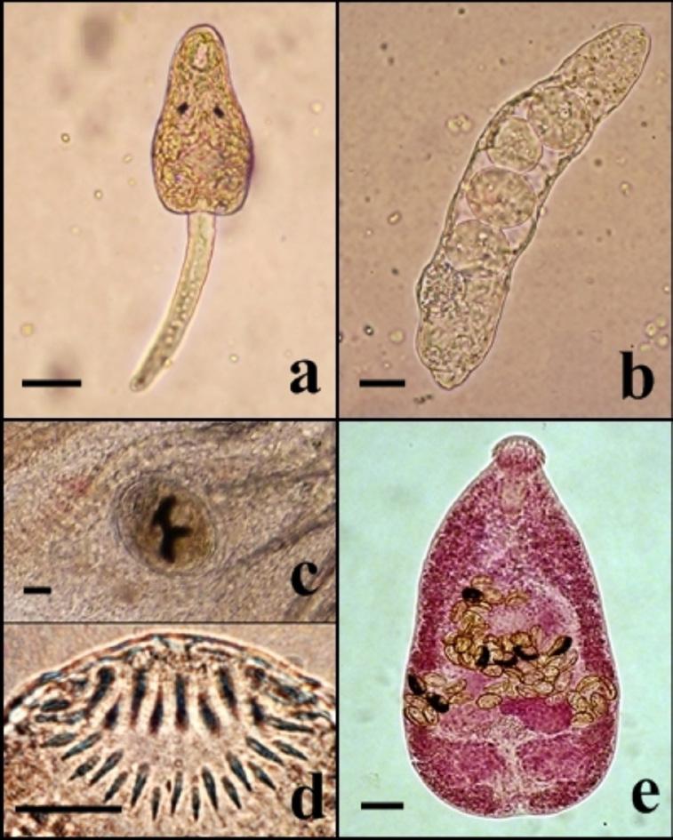 bệnh trên cá, bệnh ký sinh trùng trên cá, bệnh cá, ký sinh trùng, điều trị bệnh ký sinh trùng trên cá