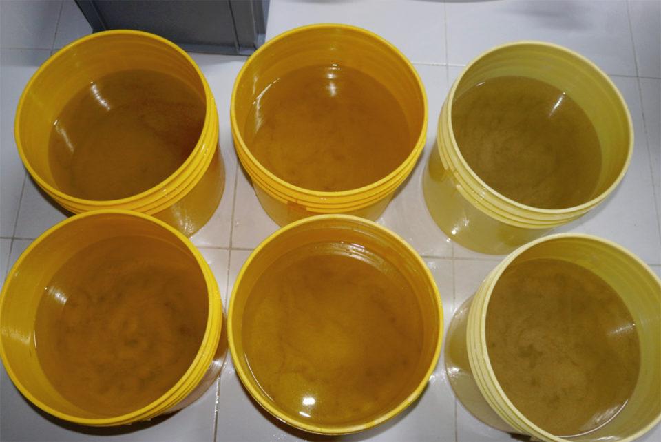 an toàn sinh học nuôi tôm, sản xuất tôm giống, quy trình sản xuất tôm giống