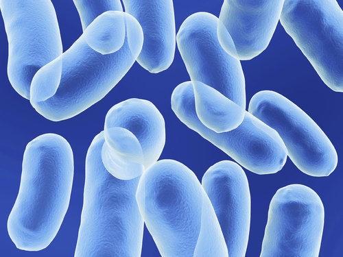 Bacillus coagulans, probiotics trên cá, probiotics trên cá diếc