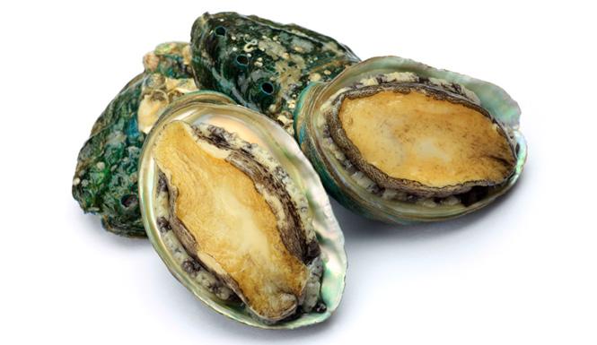 Haliotis diversicolor, cửu khổng bào, bào ngư chín lỗ