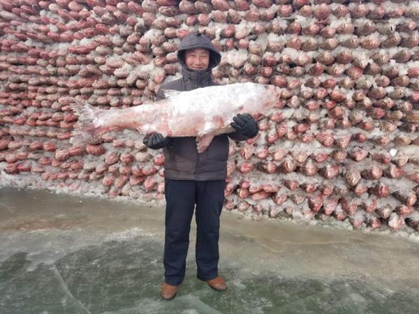 Bức tường từ cá, bức tường cá, tường cá, chuyện lạ, đánh bắt cá, bức tường kỳ lạ