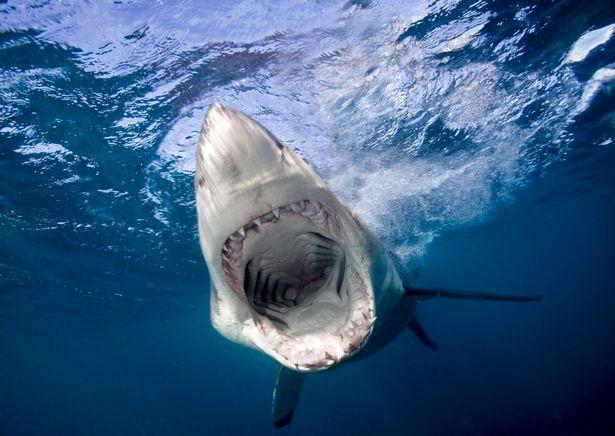 thủy quái, cá mập, cá, hóa thạch, thủy quái khổng lồ, sinh học