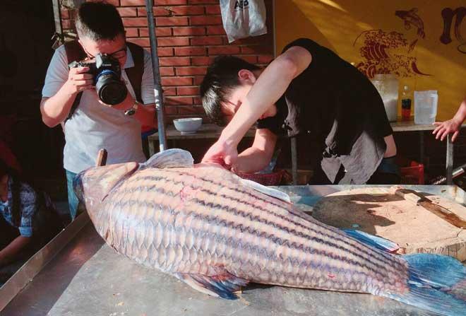 cá khủng từ biển hồ, cá lạ, cặp cá trà sóc, cá trà sóc, cá khủng