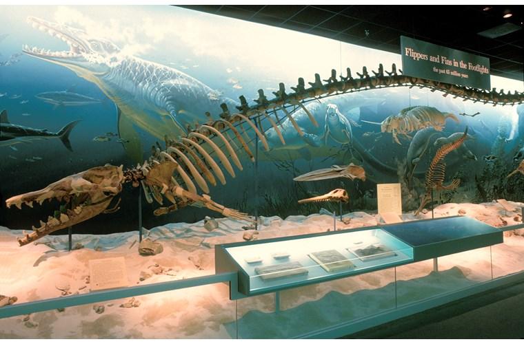 cá voi tiền sử