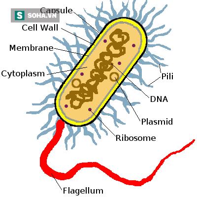 kháng sinh, kháng kháng sinh, sử dụng kháng sinh, lạm dụng kháng sinh, vi khuẩn kháng kháng sinh, cơ chế kháng sinh