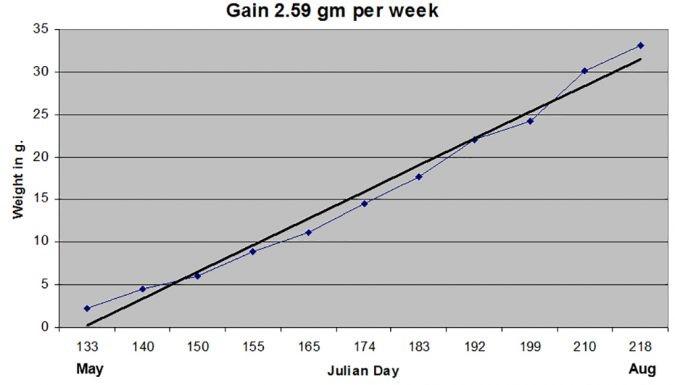 di truyền tôm, chất lượng tôm giống, tăng trưởng tôm, nuôi tôm, tốc độ tăng trưởng tôm,