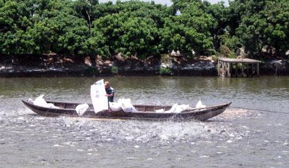 điểm nuôi cá tra