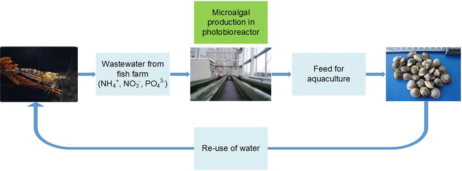 dùng tảo xử lý nước nuôi tôm, xử lý nước nuôi tôm, mô hình xử lý nước nuôi tôm