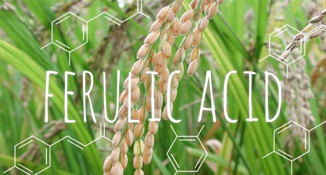 Ferulic acid: Phụ gia tiềm năng cho thức ăn cá rô phi