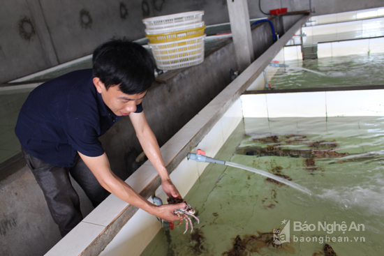 cách lưu giữ hải sản tươi sống