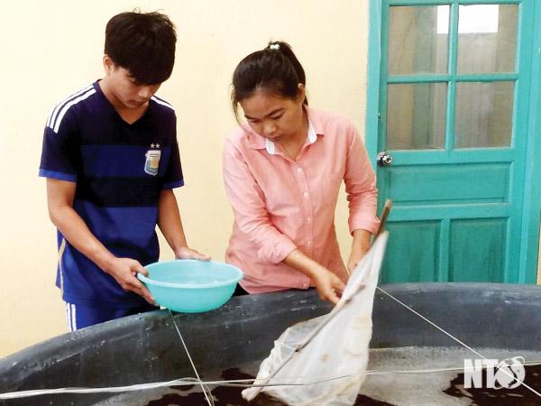 giống Ninh Thuận, giống tôm, sản xuất giống tôm, giống tôm thẻ, giống tôm sú