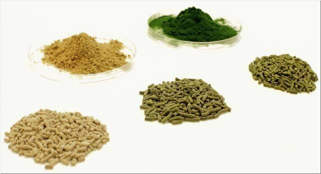 thức ăn thủy sản, nguyên liệu thức ăn thủy sản, thức ăn tôm, thức ăn từ tảo biển