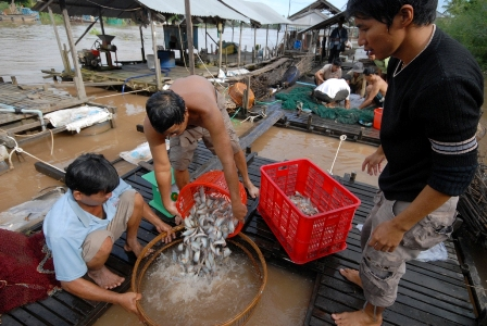 nuôi cá heo nước ngọt