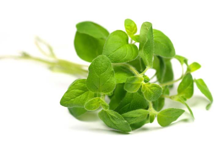 thảo dược gây mê cho thủy sản, gây mê cho động vật thủy sản, gây mê cho tôm, thảo dược gây mê