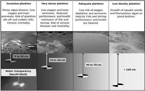 phân tầng vật lý ao nuôi, phân tầng ao nuôi tôm, sự phân tầng nhiệt độ ao nuôi tôm