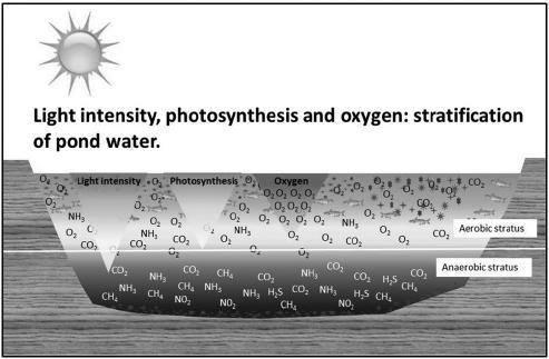 phân tầng vật lý ao nuôi, phân tầng ao nuôi tôm, sự phân tầng nhiệt độ ao nuôi