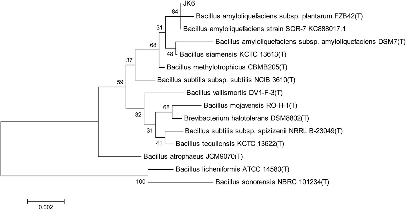 Vị trí của loài vi khuẩn Bacillus siamensis trong nhóm Bacillus