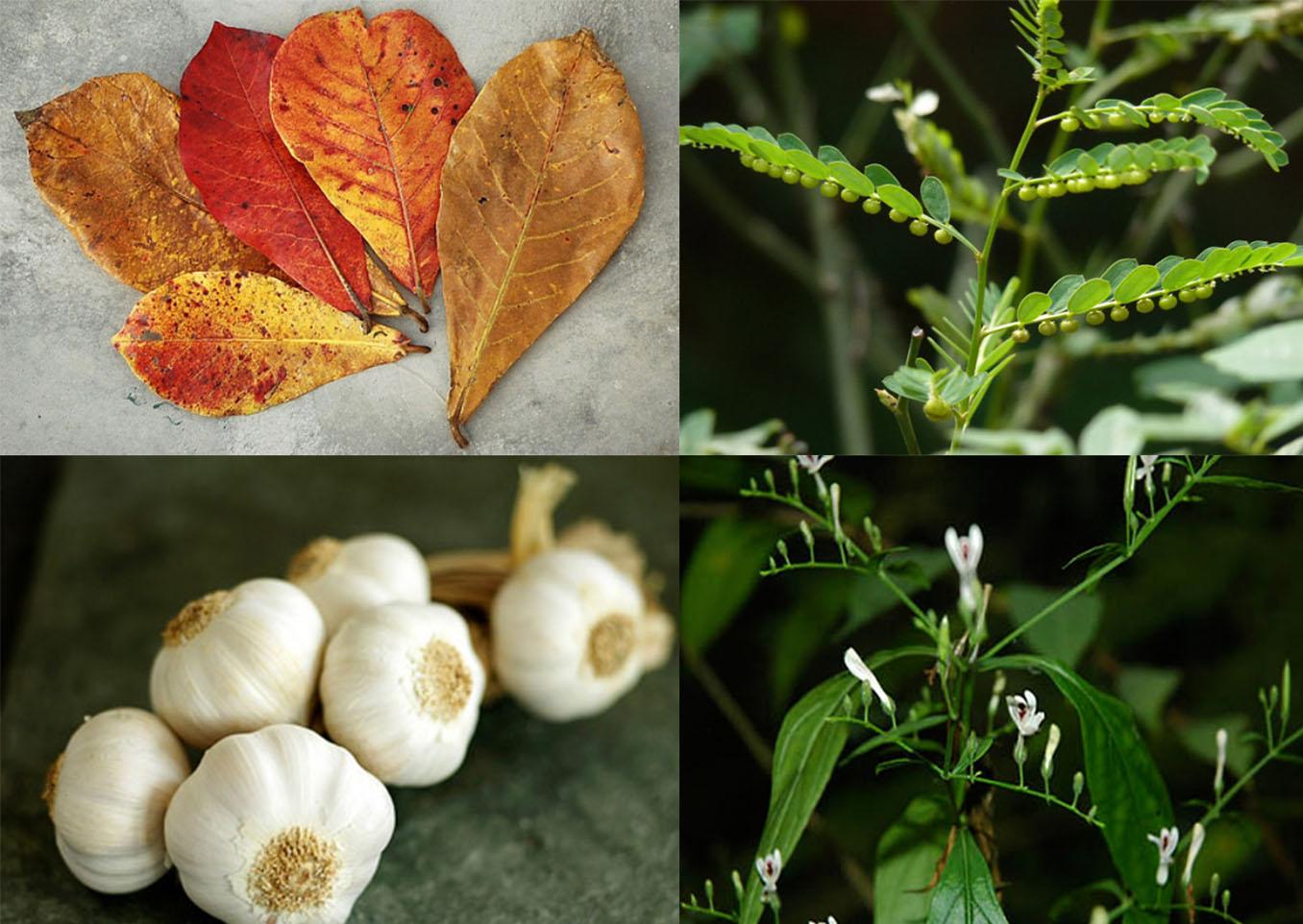 sử dụng thảo dược trong nuôi tôm