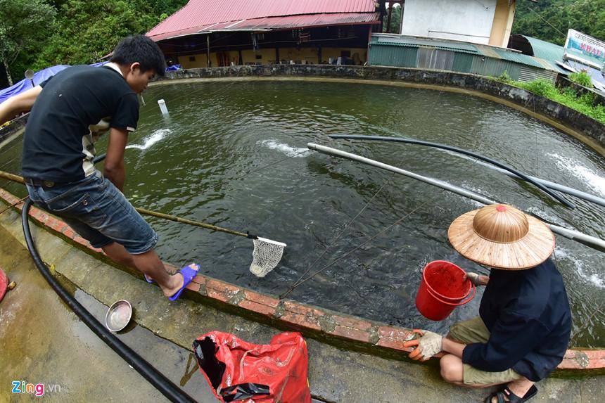nuôi cá hồi, trang trại nuôi cá hồi, nuôi cá hồi, cá hồi