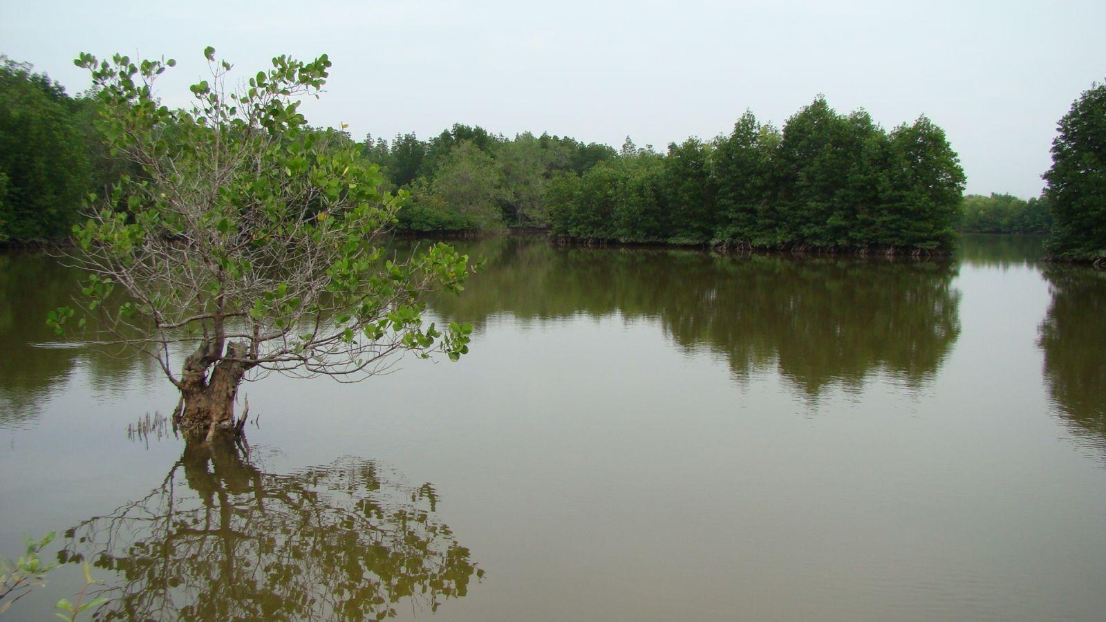 Vi khuẩn xử lý nước, vi khuẩn xử lý nước trong nuôi tôm, xử lý nước nuôi tôm, vi sinh