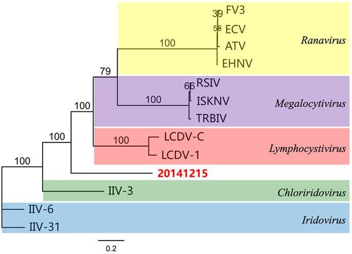 virus mới trên tôm, virus gây bệnh tôm, virus SHIV, Litopenaeus vannamei
