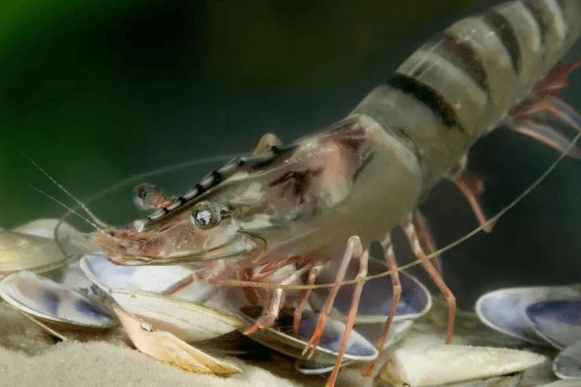 Thuốc diệt cỏ giết chết ấu trùng tôm