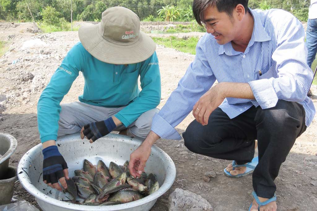 Long An: Giá cá tăng, người nuôi phấn khởi