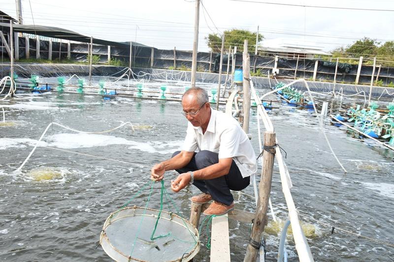 Tỷ phú nhờ khởi nghiệp với nuôi tôm biển hai giai đoạn