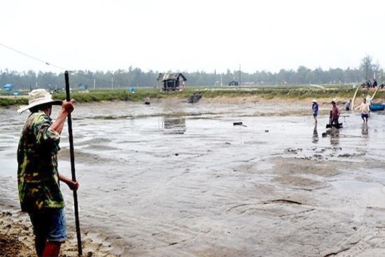Quảng Nam: Nuôi tôm nước lợ thiếu bền vững
