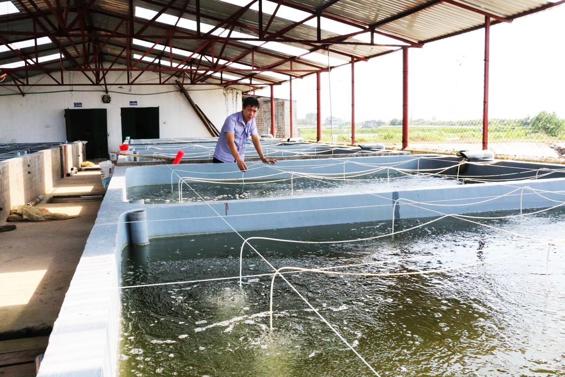 Thế mạnh nuôi trồng thủy sản ở Đầm Hà