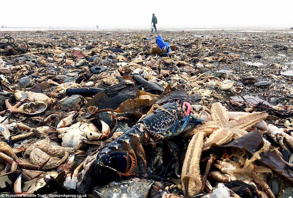 Thảm họa kết hợp thủy sản chết như ngả rạ