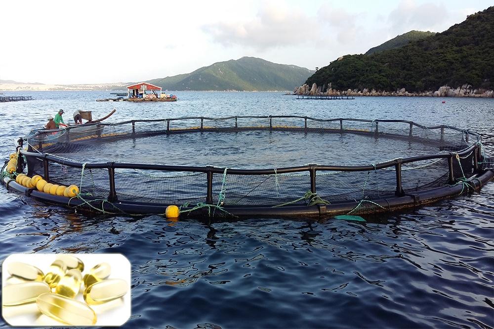 Tối ưu cho cá biển nuôi bằng việc bổ sung DHA hợp lý