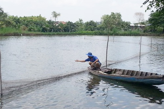 Nghịch lý cá tra tăng giá