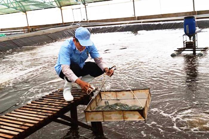 Cà Mau: Sẽ có khu tổ hợp thủy sản công nghệ cao ở Năm Căn