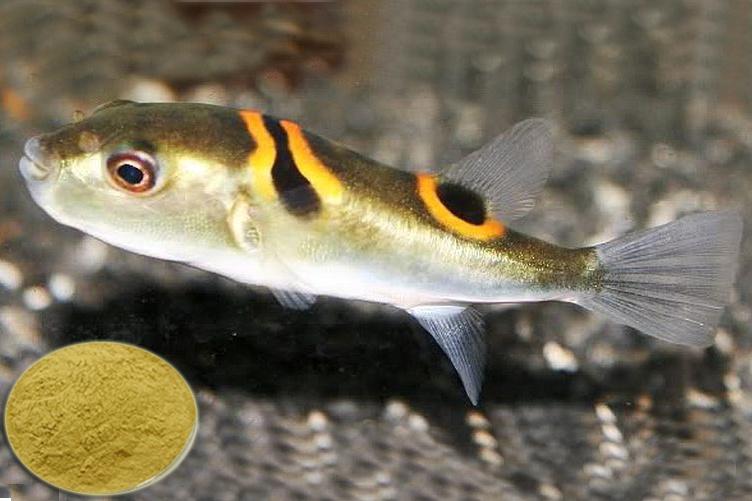 Cải thiện tăng trưởng cho cá bằng cây Thảo đại thanh