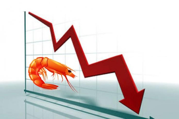 Giải pháp nào cho người nuôi và nhà xuất khẩu khi giá tôm giảm mạnh