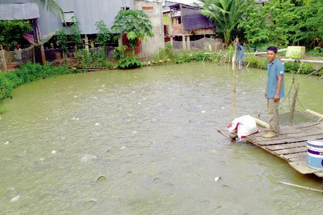 Đồng Tháp: Hiệu quả nuôi thủy sản ở Tam Nông