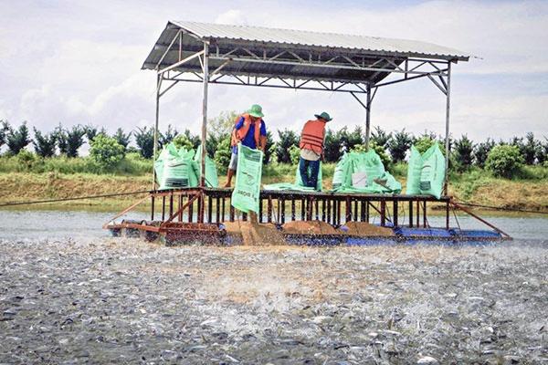 Kiểm soát chặt chẽ diện tích nuôi cá tra tự phát tại các tỉnh