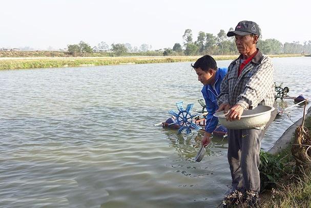 Yên Thành: Nông dân nuôi cá rô phi VietGAP đạt sản lượng 20 tấn/ha