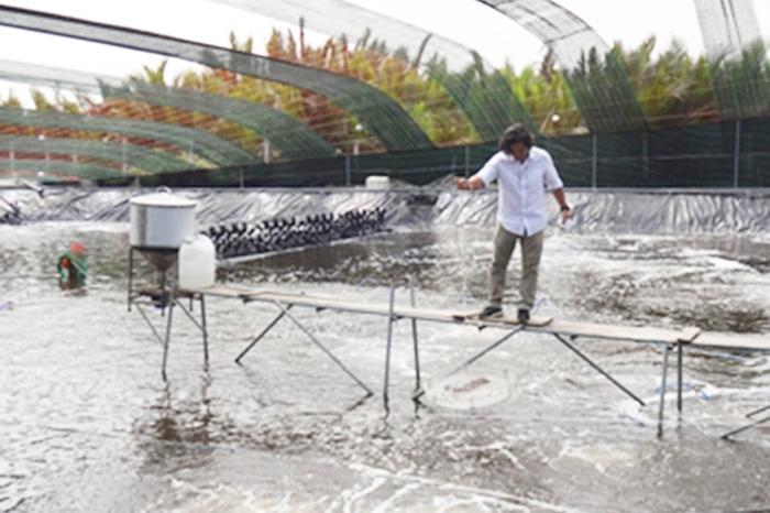 Ứng dụng công nghệ cao trong nuôi tôm TP HCM