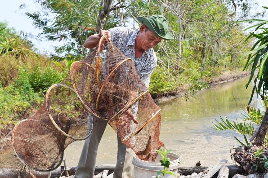 Phát triển và nâng cao hiệu quả mô hình sản xuất lúa - tôm