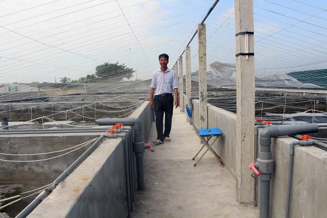 Mô hình nuôi tôm trong bể xi măng ở Nam Định