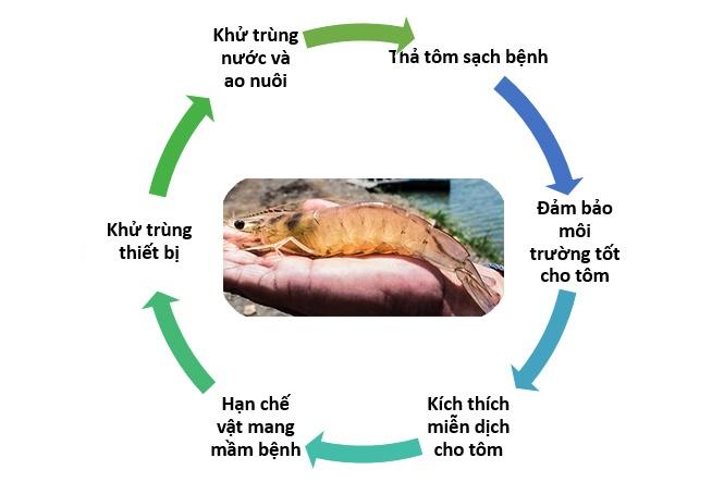 Chiến lược kiểm soát bệnh đốm trắng trên tôm