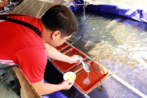 Bắc Giang: sinh sản nhân tạo thành công giống cá Bỗng
