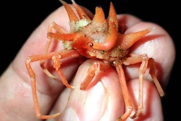 Những sinh vật biển kỳ lạ mới được phát hiện dưới đáy biển Indonesia