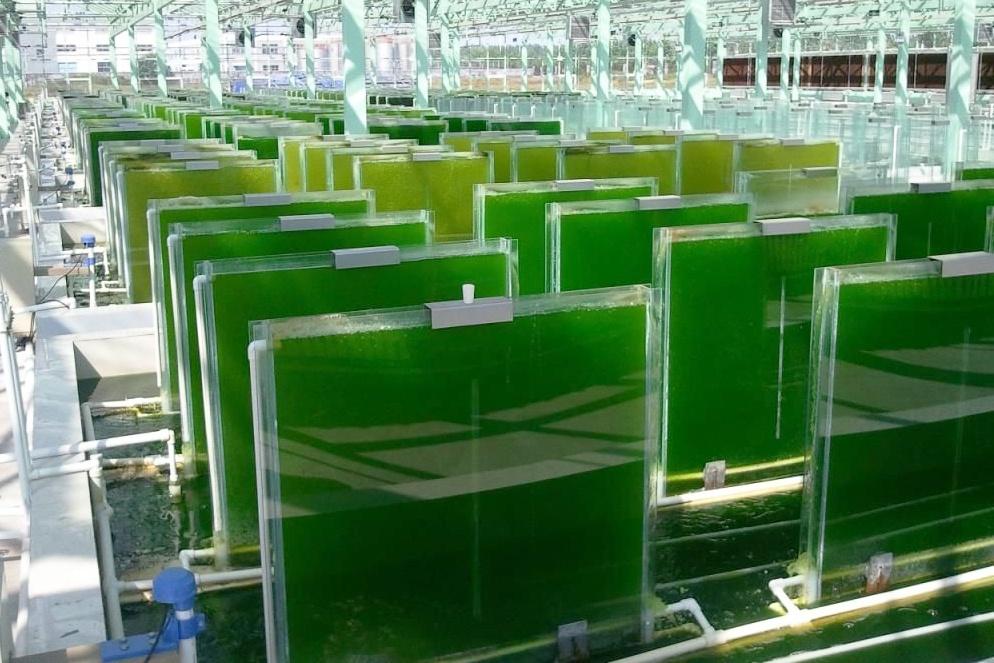 Ứng dụng công nghệ sinh học vi tảo kiểm soát dịch bệnh trên tôm cá