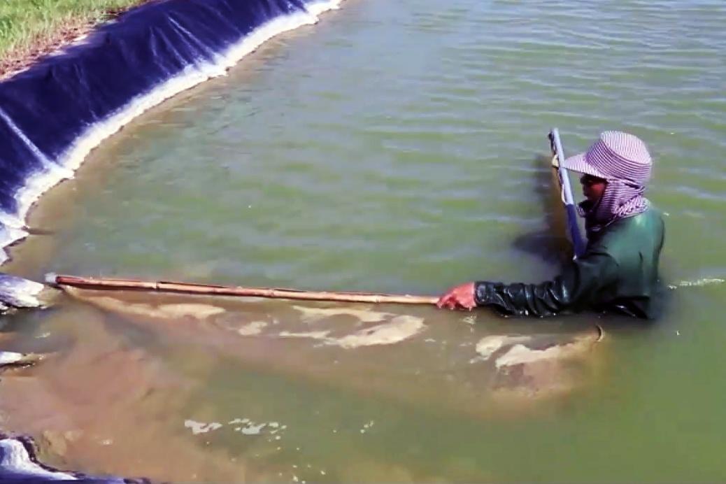 Sản xuất cá giống, thu hơn 20 tỷ đồng/năm